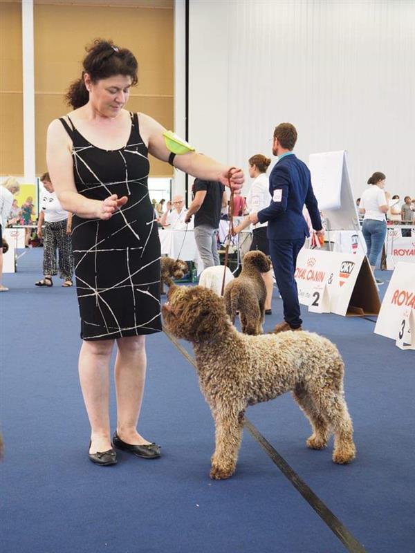 European Dog Show 14 16 Juni 2019 Wels Osterreich